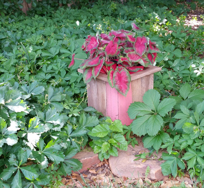 Coral Reclaimed Wood Flower Pot Holders, Rustic Wedding, Western ...