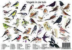Ongekend soorten vogels spanje - Google zoeken | Vogels, Vogel thema SL-05