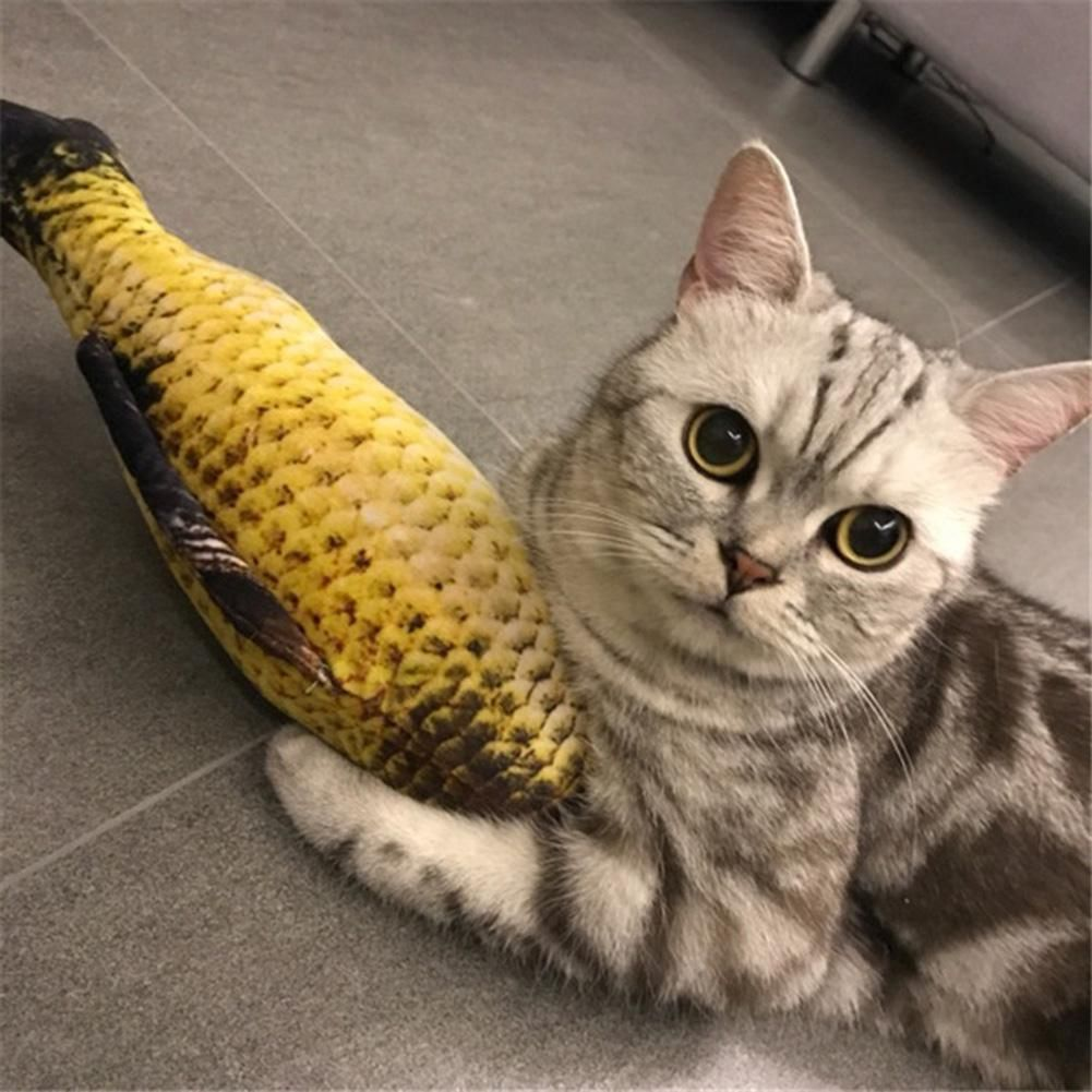 No You Cannot Have My Fishy P Cat Toys Pets Kitten Toys