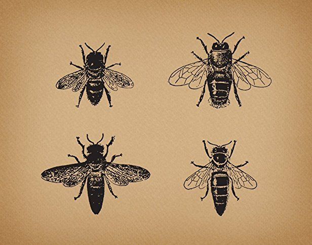 Vintage Bees Artwork With An Old Illustration Of Four Insect Bug Art Print Or Poster A Aged Brown Paper Style