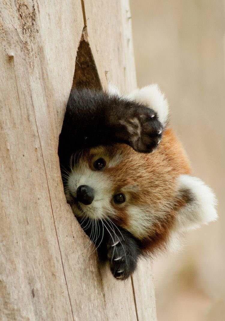 Pin By Renee Orth On Fofuras Cute Baby Animals Cute Little Animals Cute Animals