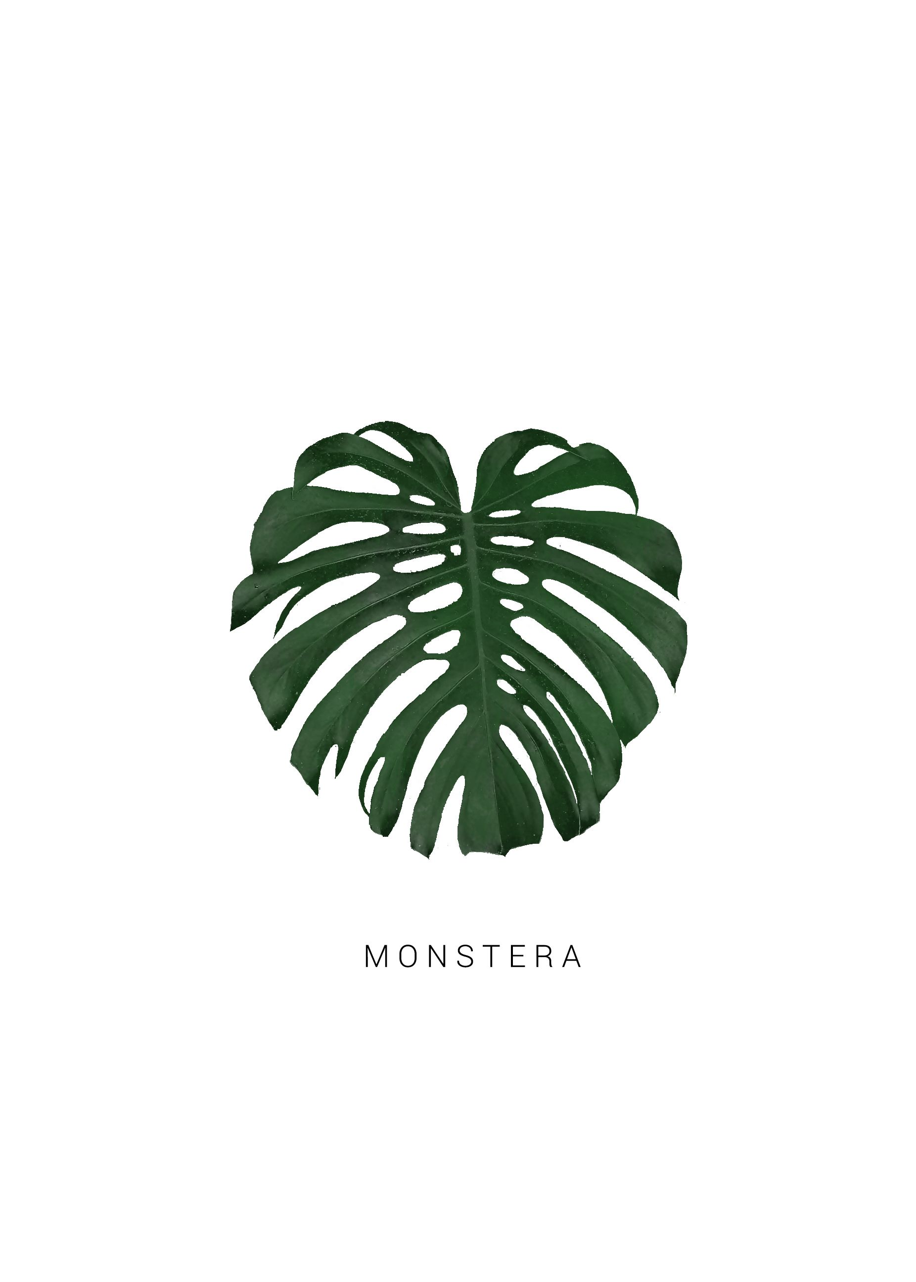 Monstera Plant Poster Greenery Print Printable Wall Art Download  Scandinavian Wall Art Simple Minimal Poster Scandinavian Print Tropical