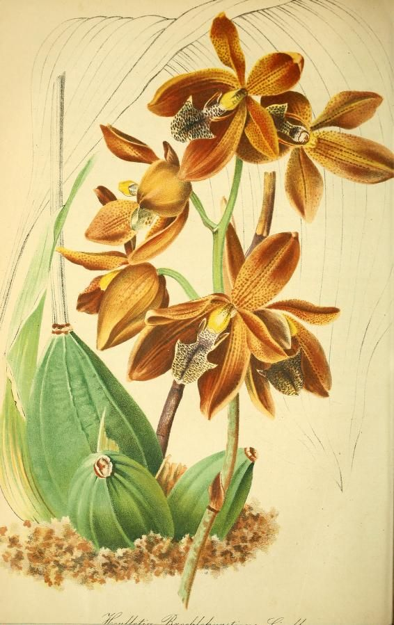 Bd.7(1858) - Gartenflora. - Biodiversity Heritage Library