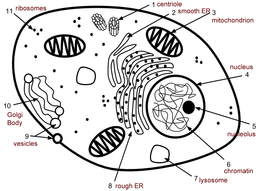 Cell Label Simple vs. Complex ANSWERS Coloring pages