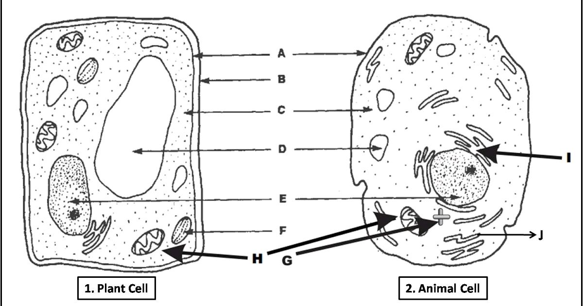 Try this diagram quiz on plant & animal cell. #biology #