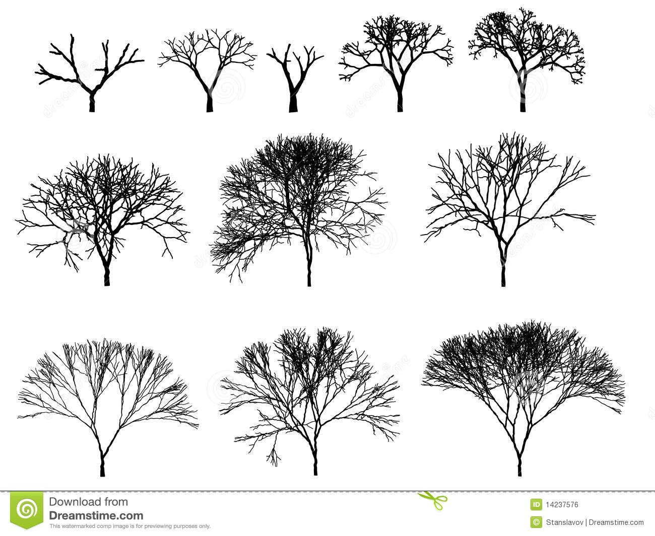 tree architecture drawing google search - Architecture Drawing Of Trees