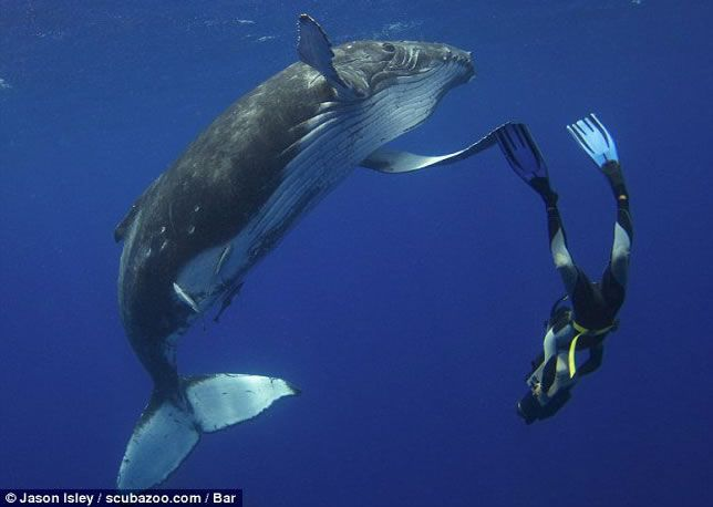 Whale of a good time High Five!