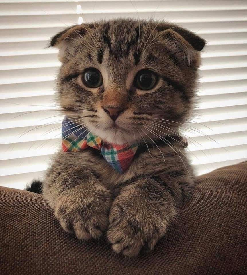 Look At His Big Round Eyes Cute Animals Cute Cats Kittens Cutest