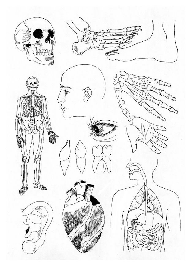 coloring page Human body - Human body | coloring pages and cards ...