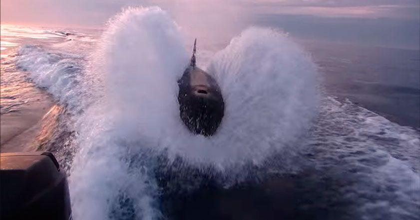 Киты преследовали лодку и выпрыгивали из воды, пытаясь достать свою цель; несколько раз хищников и лодку разделяло буквально пару метров.