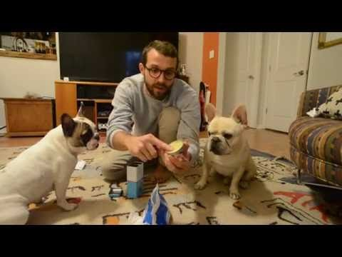 How To Clean Your French Bulldog S Face And Facial Folds Wrinkles A French Bulldog Face Might The Cutest Of Al French Bulldog Bulldog French Bulldog Puppies