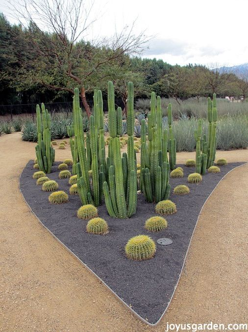 Sunnylands Center   Succulent \ Cacti Gardens Nuestro nidito