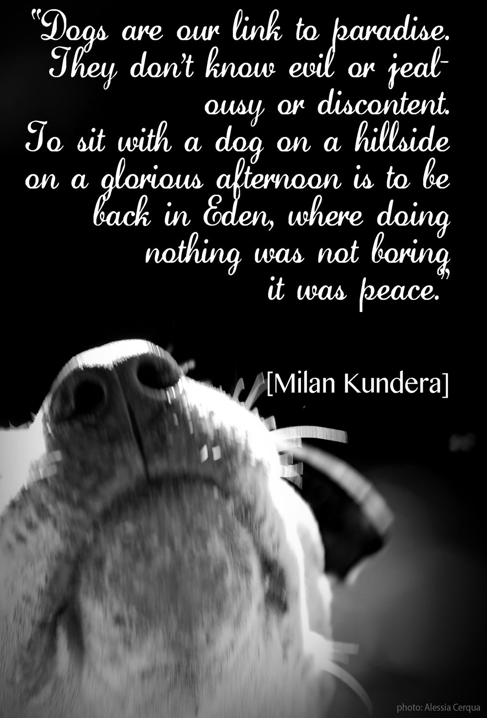 Dogs' unconditional love. Like dogs? Be sure to visit and