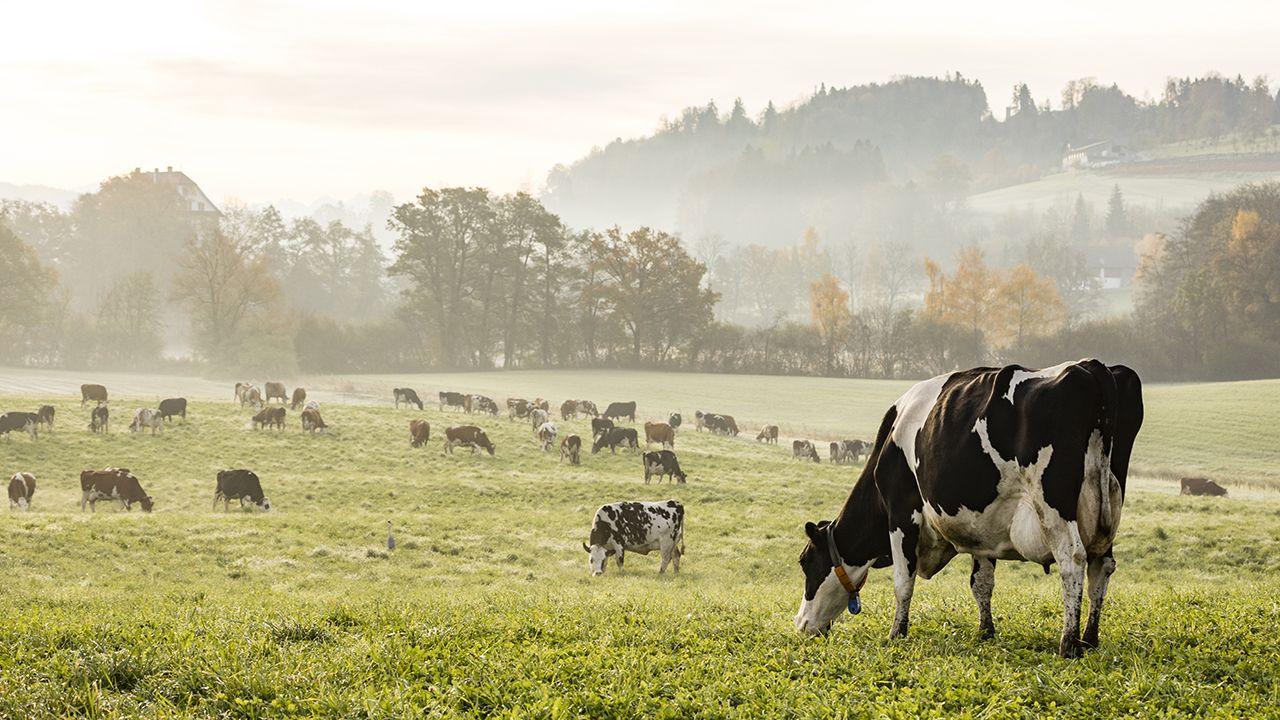 Fox News Mad Cow Disease Found On Scotland Farm Government Says Cow Small Cow Farm