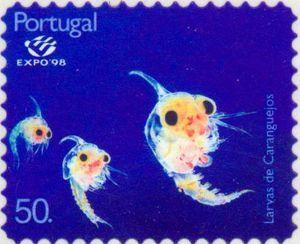 Crab (Pilumnus sp.), Juvenile