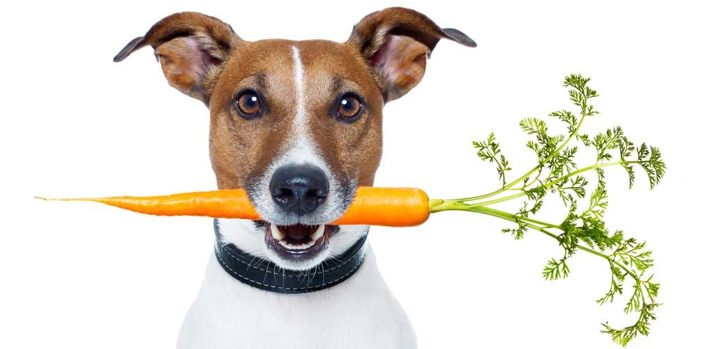 Dog Food Nutrition Guidelines