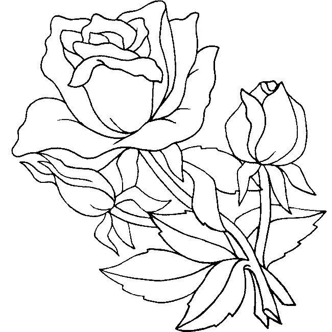 Dibujos para Colorear Naturaleza 10   Dibujos para colorear para ...