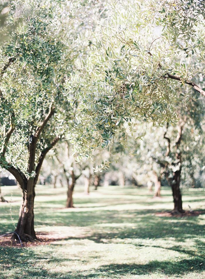 Olive grove | Living the Life | Pinterest | Magnolia, Gardens and Rouge