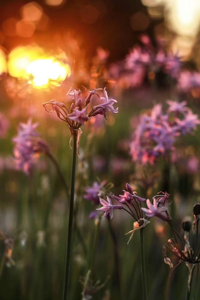Backlit flowers