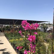 Lakewood Nursery 4114 Lincoln Ave Cypress Ca Is An
