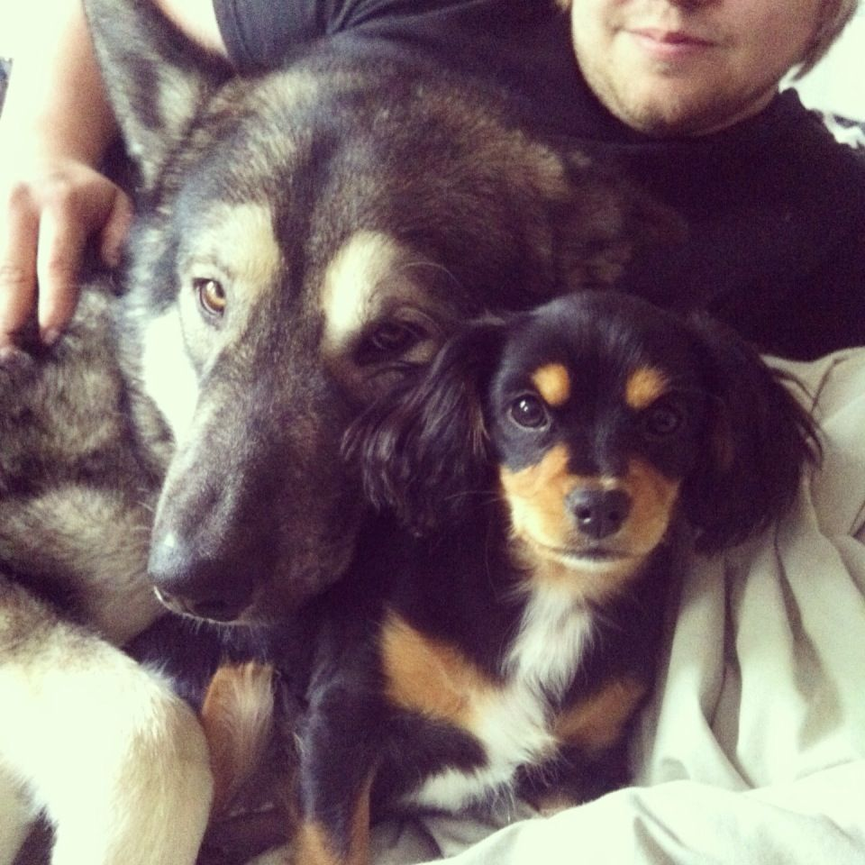 Here Are My Babies George 1 Year Who Is An Alaskan Malamute X