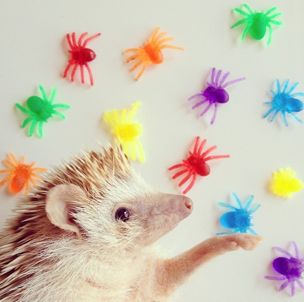 Meet Darcy The Flying Hedgehog, see more here: http://www.pauseandplay.co.uk/darcy-the-flying-hedgehog/