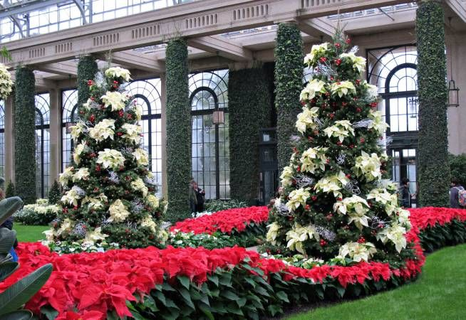 Espectaculares jardines navideños Árboles de navidad Pinterest - jardines navideos