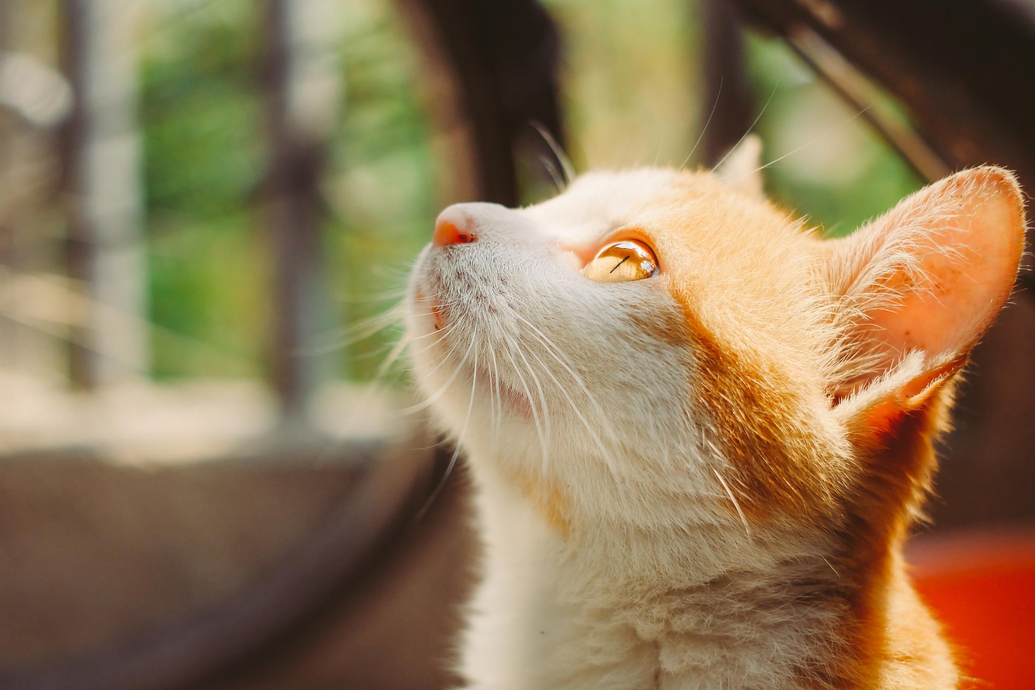 cat+by+YZY++on+500px
