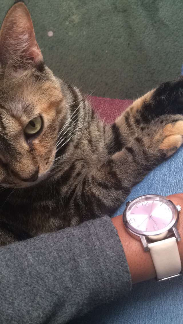 Cats. Watches. Pretty.  @6god.mami