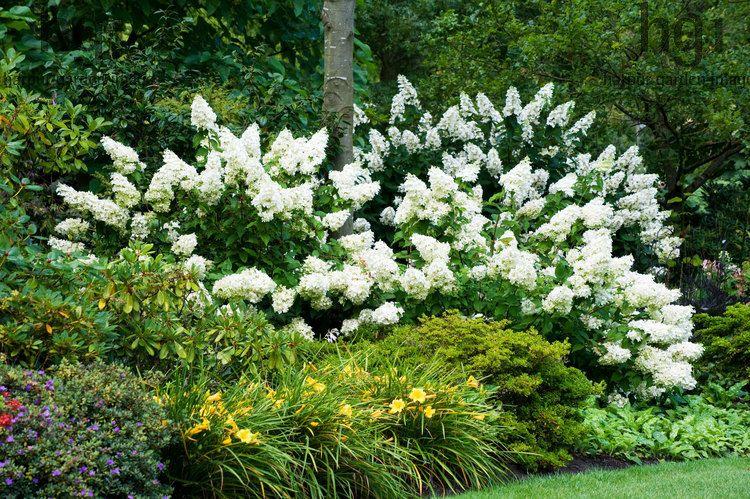 Harpur Garden Images Ltd Mwis1072 A Shadey Border Under Trees With Azaleas And Hemerocallisand Large Flowering Evergreen Flowers Garden Shrubs Garden Images
