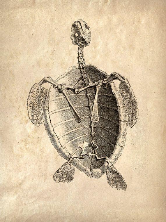 11x14 Vintage Animal Anatomy. Sea Turlte Skeleton poster CP-AN002. $15.00, via Etsy.