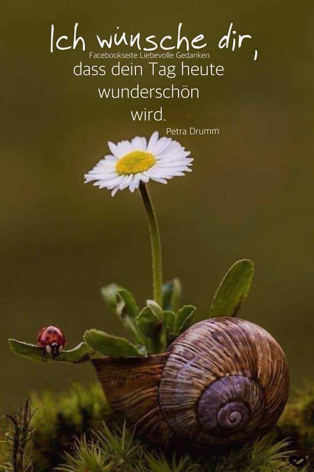 Pin von Heinrich Thoben auf Guten Tag | Flowers, Nature ...