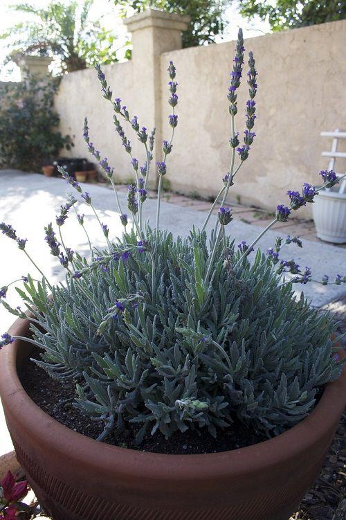 Herb Garden Outdoor Design Spaces