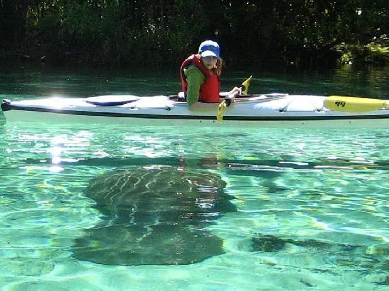 ecf616c7c3 Kayaking Crystal River Springs with manatee -  kayak  kayaking  manatee