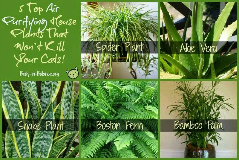Top 5 Air Purifying House Plants That Won't Kill Your Cats