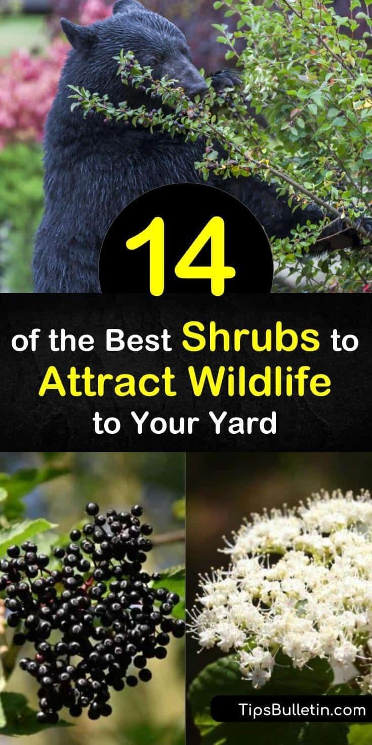 how to attract deer to my yard