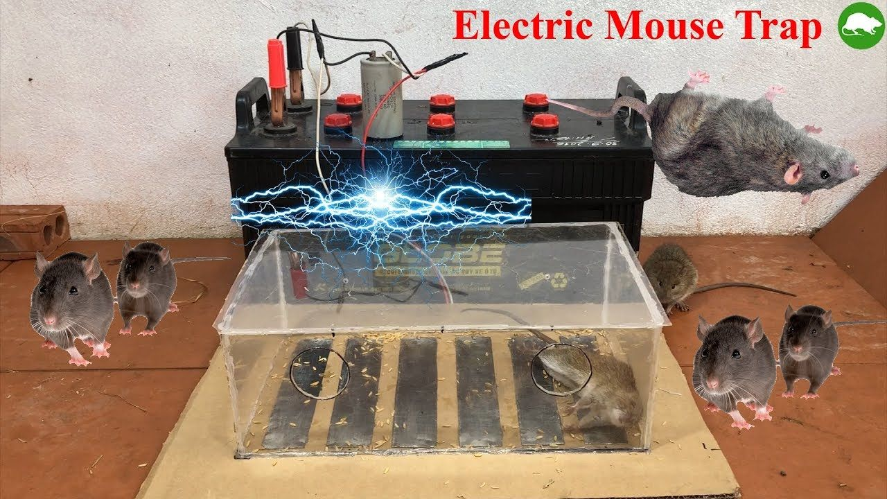 Electric Mouse Trap Homemade Electric Mousetrap Work With Battery 12v Tip Mouse Rat Trap Youtube Electric Mouse Trap Rat Traps Mouse Traps