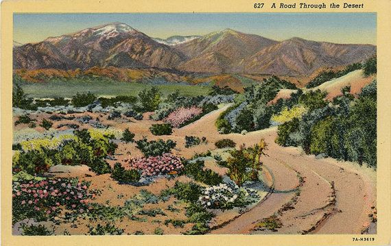 "Vintage botanical postcard of ""A Road Through the Desert"" in the Southwest."