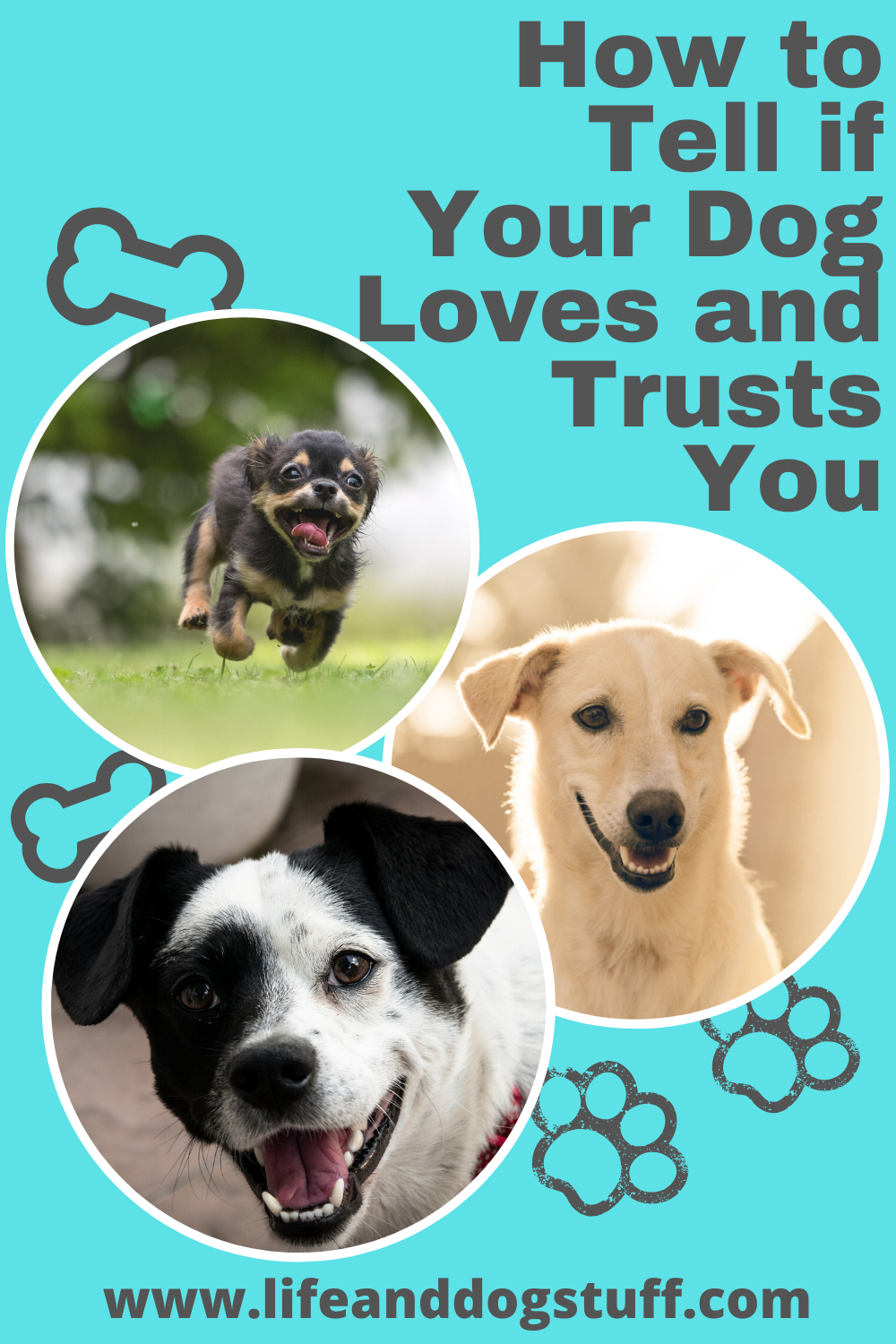 How to Tell if Your Dog Loves and Trusts You. #dogs #doglovers #dogtips