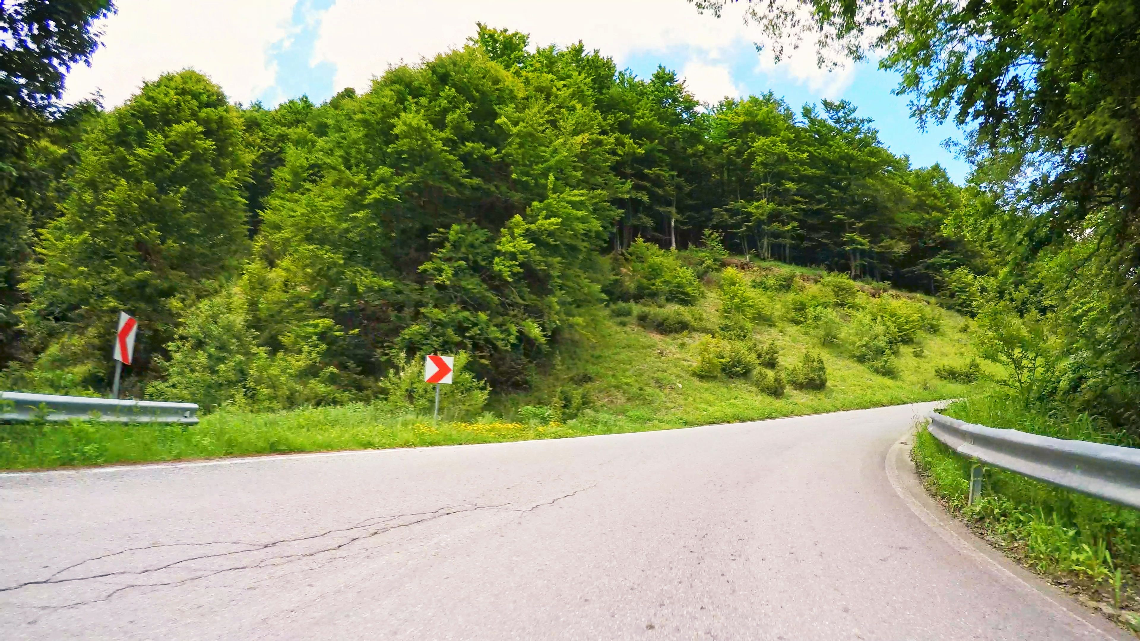 POV drive nature forest green trees sunshine sunny asphalt