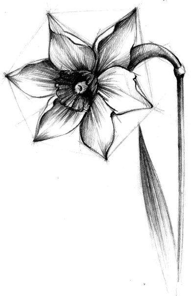 Цветок рисунки карандашом