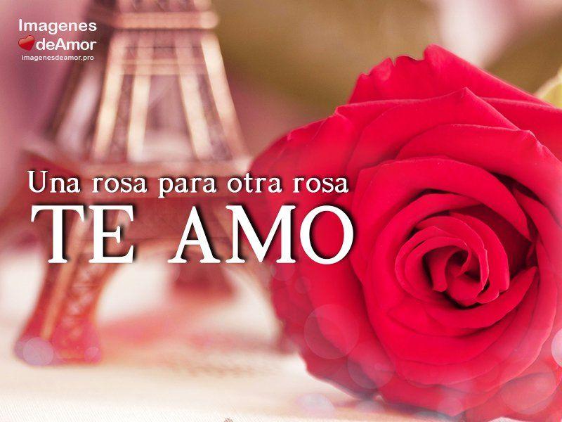 Una Rosas Para Otra Rosa Te Amo Familia Padres Hijasos