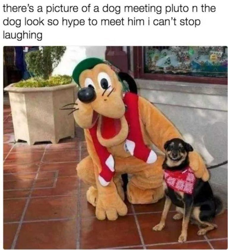 "New Funny Things 101 Funny Dog Memes Almost Guaranteed to Make You Laugh All Day 101 best funny dog memes - ""There's a picture of a dog meeting pluto n the dog look so hype to meet him I can't stop laughing."" 6"