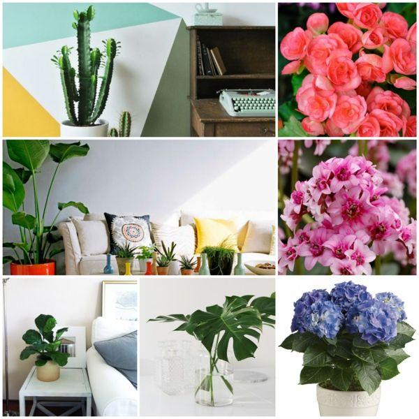 blühende zimmerpflanzen mit mehr oder wenig bedarf an licht, Garten und Bauten