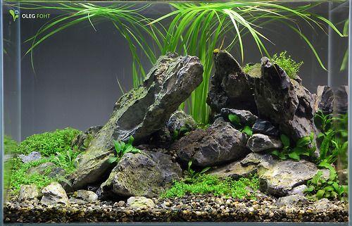 40 liter nano aquarium 2 wochen alt awesome aquascapes pinterest nano aquarium. Black Bedroom Furniture Sets. Home Design Ideas