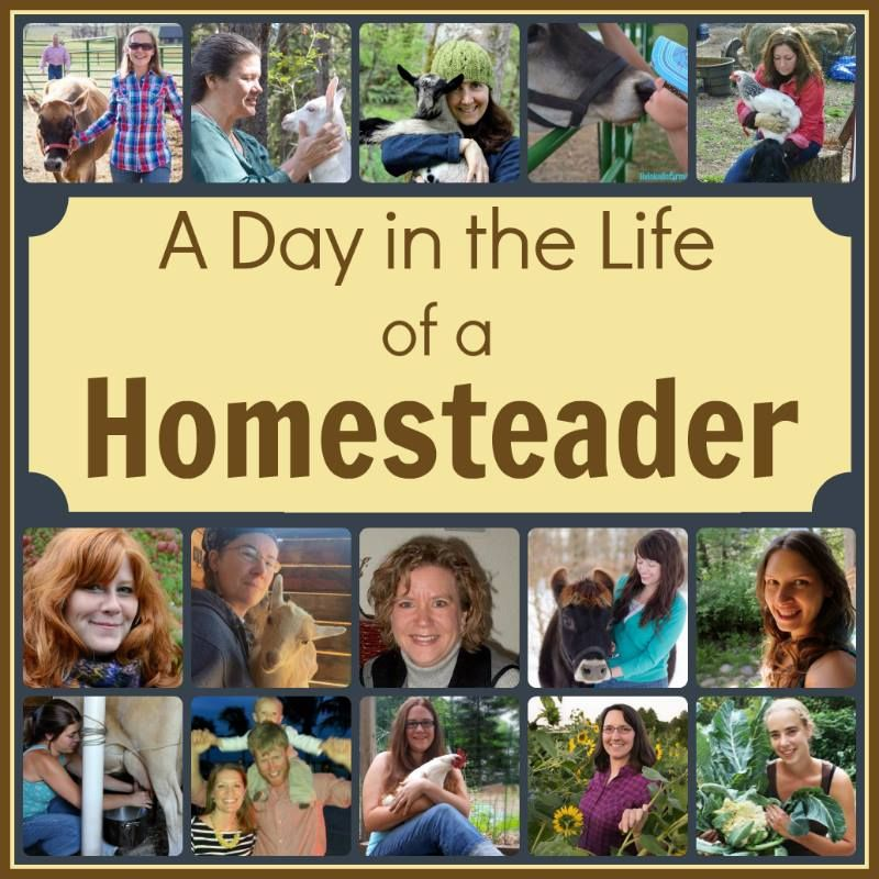 Homesteading is an adventure.  It can provide a sense of fulfillment and be a source of pride.  On a homestead you may find the following: animals (for food), vegetable gardens, fruit trees and/or …