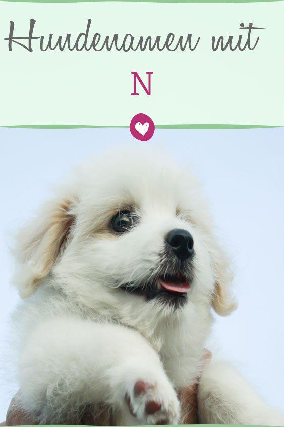 Beliebte Hundenamen