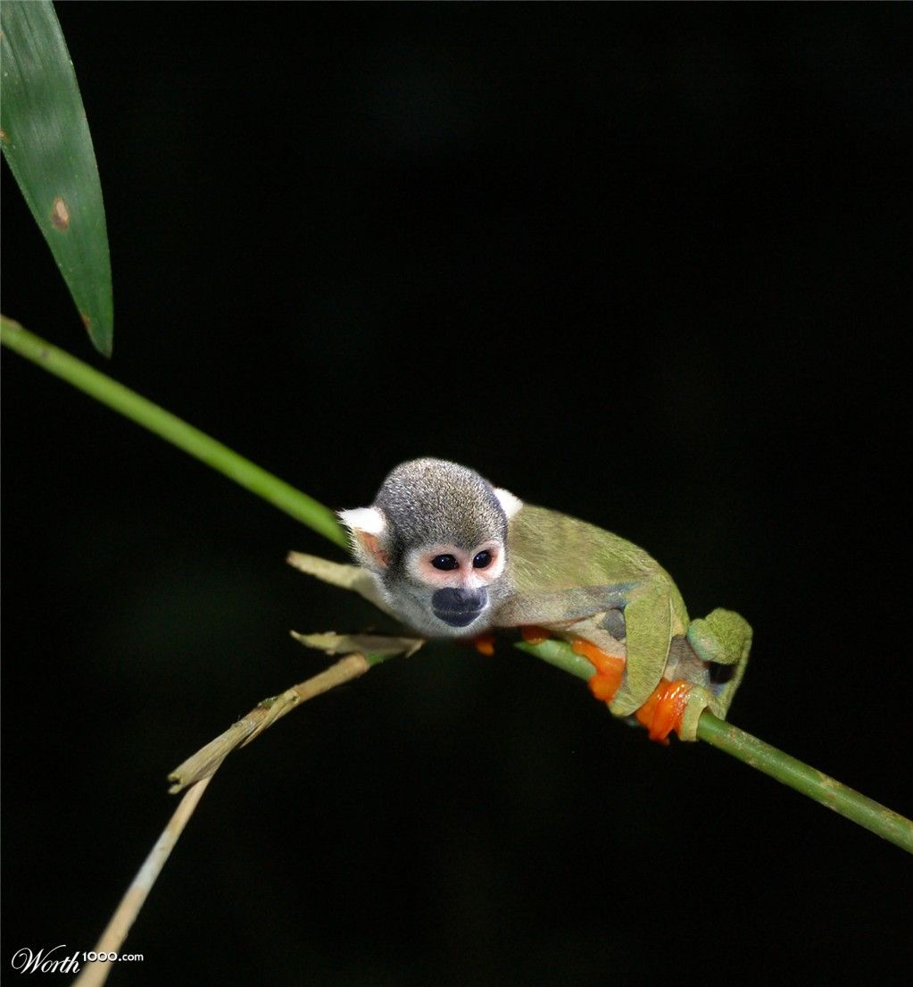 Tree Frog Monkey - Worth1000 Contests