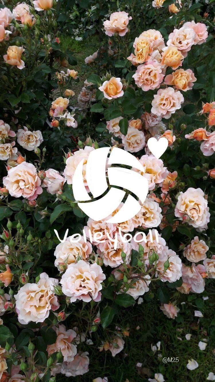 Volleyball Background Wallpaper 11 Flower Aesthetic Flower Backgrounds Flower Wallpaper
