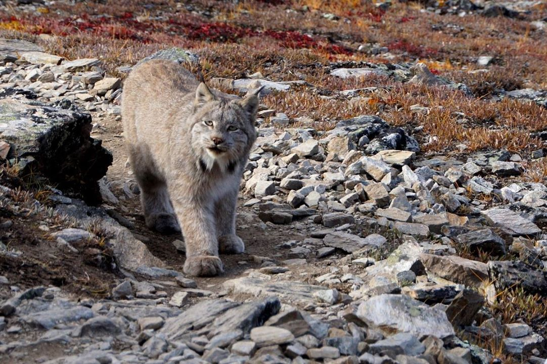 Denali National Park and Preserve· A big thank you to